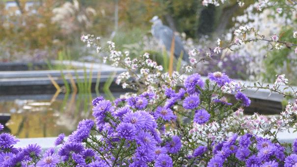 Botanische Tuin Amsterdam : Home botanische tuin zuidas